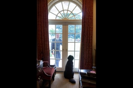 Bo, the Obama family dog, waits to greet President Barack Obama at the door in the Outer Oval Office, July 15, 2014. (Official White House Photo by Pete Souza)