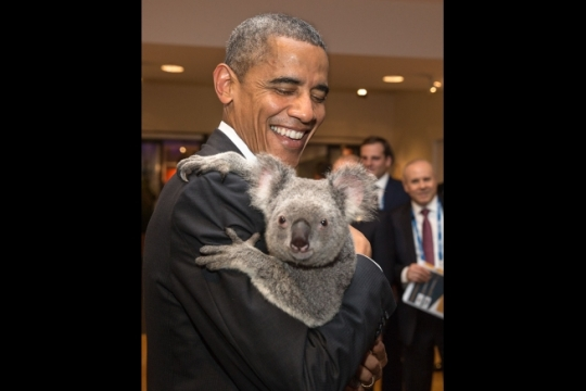 President Barack Obama holds a koala prior to the G20 Welcome to Country Ceremony at the Brisbane Convention and Exhibition Center, Brisbane, Australia, Nov. 15, 2014. (Official White House Photo by Pete Souza)