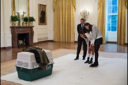 President Barack Obama and daughters Sasha and Malia look in on Mac, one of two turkeys spared this year from the Thanksgiving dinner table by presidential pardon, in the East Room of the White House prior to the annual National Thanksgiving Turkey pardon ceremony, Nov. 26, 2014. (Official White House Photo by Pete Souza)