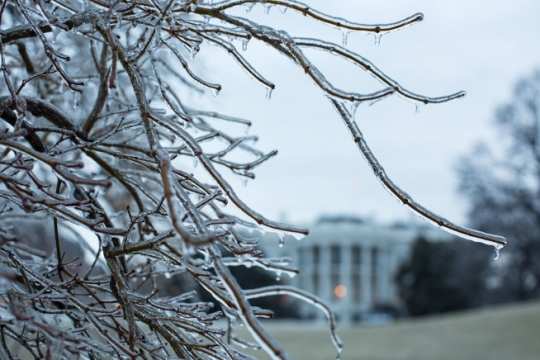 Ice covers trees on the South Grounds of the White House, March 2, 2015. (Official White House Photo by Pete Souza)