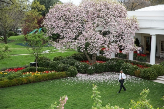 President Barack Obama walks across the Rose Garden of the White House on his way to signing the bill H.R. 2 Medicare Access and CHIP Reauthorization Act of 2015, April 16, 2015. (Official White House Photo by Lawrence Jackson)