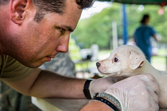150602-N-XQ474-188 COLÓN, Panama (June 2, 2015) - Army Staff Sgt. Thomas Worley, a native of Jackson, Miss., assigned to the Army's 10th Mountain Division Fort Polk, La., examines a puppy at a veterinary site during Continuing Promise 2015. Continuing Promise is a U.S. Southern Command-sponsored and U.S. Naval Forces Southern Command/U.S. 4th Fleet-conducted deployment to conduct civil-military operations including humanitarian-civil assistance, subject matter expert exchanges, medical, dental, veterinary and engineering support and disaster response to partner nations and to show U.S. support and commitment to Central and South America and the Caribbean. (U.S. Navy photo by Mass Communication Specialist 3rd Class Andrew Schneider/Released)