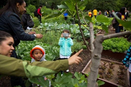 """Parents, staff and students tour the White House Kitchen Garden on the South Grounds of the White House after participating in a """"Let's Move!"""" event preparing and eating a garden harvest with the First Lady in the East Room of the White House, June 3, 2015. (Official White House Photo by Lawrence Jackson)"""