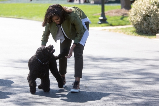 """First Lady Michelle Obama walks back to the White House with Obama family pet, Sunny, after joining students for the """"Let's Move!"""" spring garden planting in the White House Kitchen Garden, April 5, 2016. (Official White House Photo by Lawrence Jackson)"""